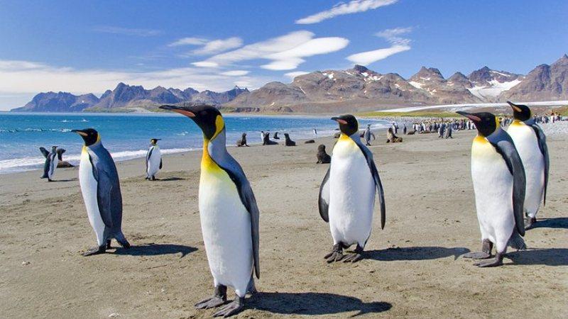 Traveling to the Falkland Islands (Islas Malvinas)